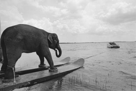 elefante-trasportato-mare