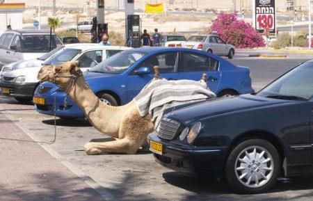 cammello-auto